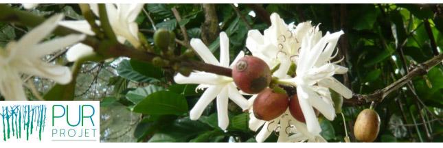 Nespresso se plante au Guatemala et en Colombie