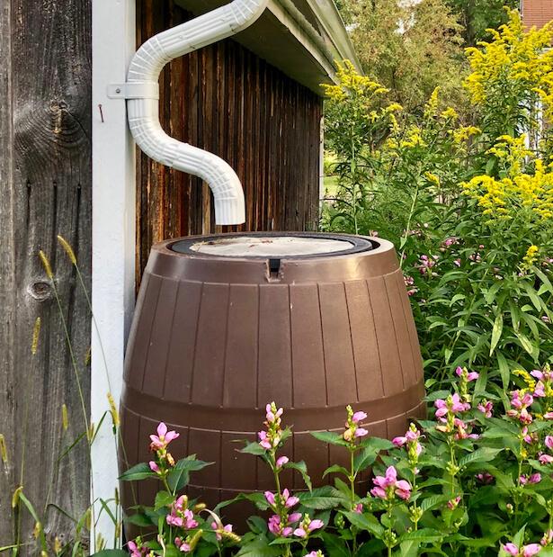 économiser l'eau au jardin