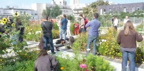 Potagers Urbains Quels Risques De Pollution