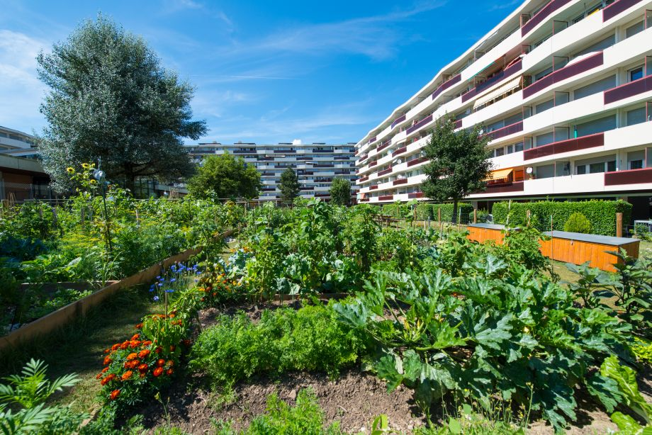 Potagers urbains quels risques de pollution for Jardin urbain permaculture