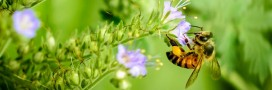 L'apithérapie fait son miel de votre santé