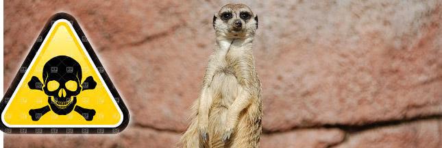 Le rapport coup de poing du WWF : 50% d'animaux sauvages disparus !