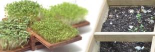 Micro-jardin : la tendance de demain ?