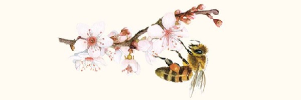 Le pollen en apithéraphie