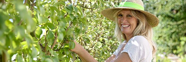 Jardinage - En septembre, récoltez les poires