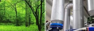 L'Oréal, du bio à la biomasse