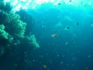 eaux profondes 1