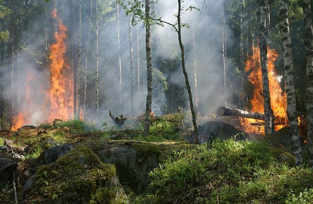Feux forêts