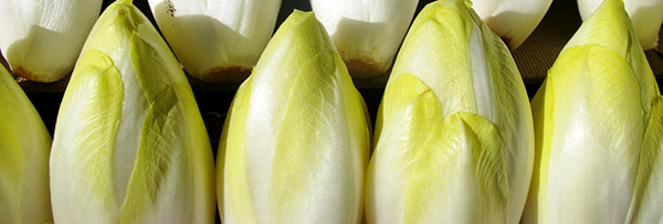 endive-chicon-legume-bienfaits-04