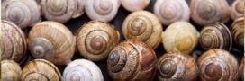 Vrais faux produits artisanaux - Après le plombier, l'escargot polonais