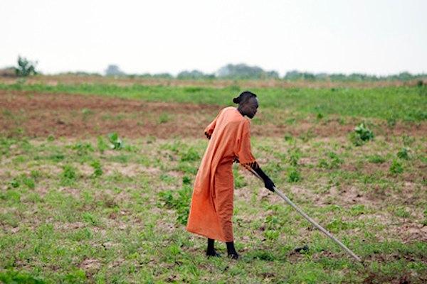 fermier-sud-soudan