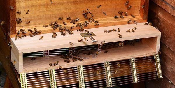 miel-abeilles-fleurs-03