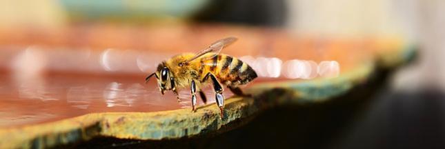 6 gestes simples pour aider les abeilles