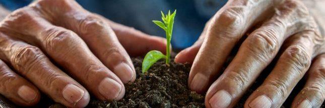 Agriculture : des graines en open source contre le brevetage du vivant