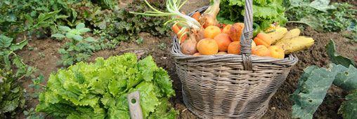 fruits légumes bio