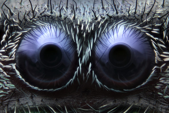 Photos au microscope Noah_Fram-Schwartz_spider-eyes_1