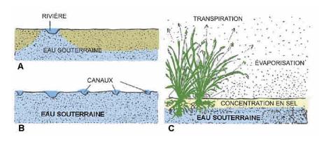 Salinisation des sols