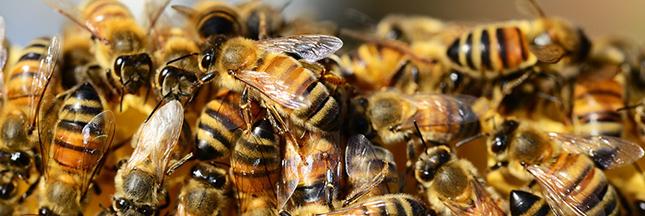Un pesticide interdit aux Etats-Unis autorisé en Europe