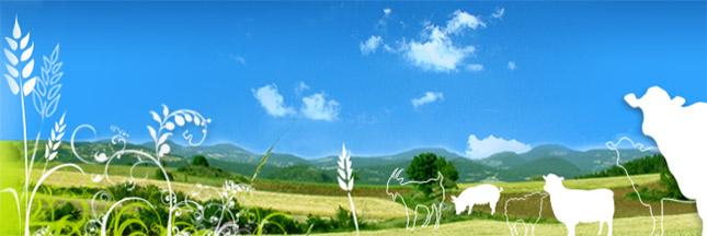 Une plateforme agricole locale pour circuit court en Haute-Loire