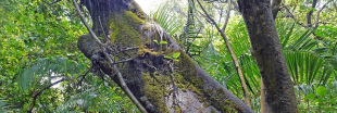 Déforestation de la forêt amazonienne, ça  se dégrade encore