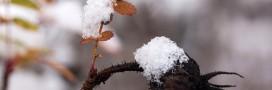 Jardiner en décembre: le jardin en hiver, le potager