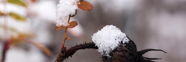 Jardiner en d cembre le jardin en hiver le potager for Jardin anglais en hiver