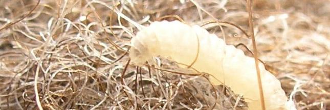 Traitement Mites Bois - Antimites, toutes les astuces naturelles et efficaces