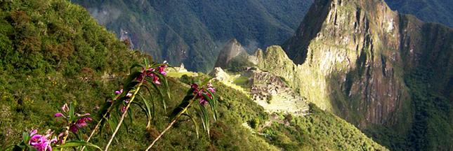 Forêt tropicale : pourquoi 2014 a été (plutôt) une bonne année