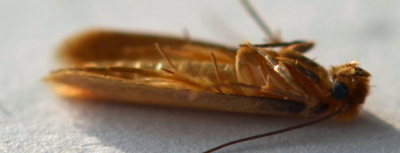 Antimites toutes les astuces naturelles et efficaces - Que faire contre les mites ...