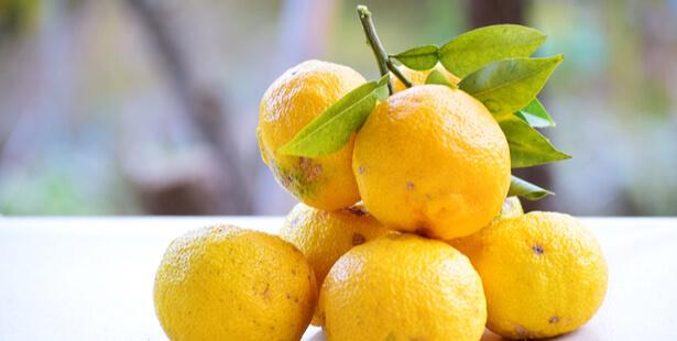 risotto citron