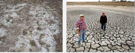 salinisation-des-terres-agricoles