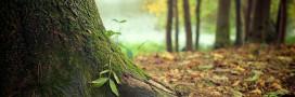 2015, année internationale des sols