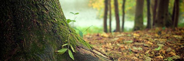Faut-il investir dans une forêt ?