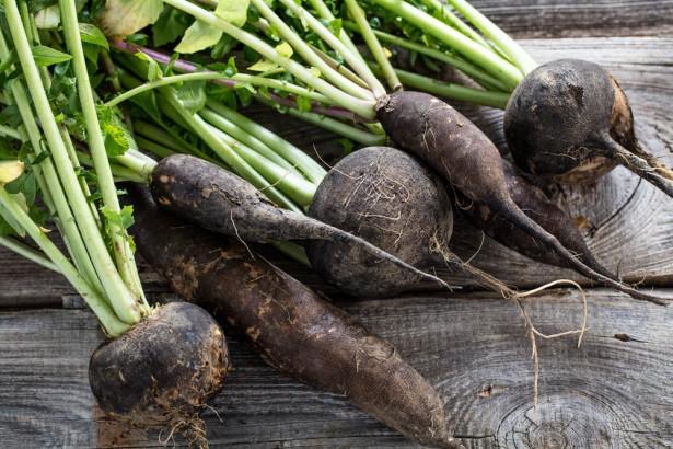 légumes oubliés, radis noir