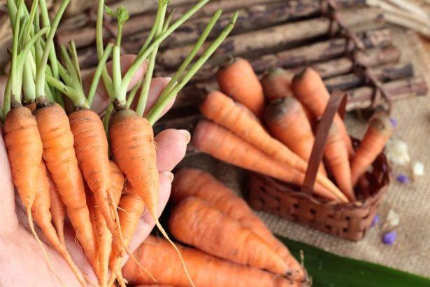 légumes d'hiver, carotte