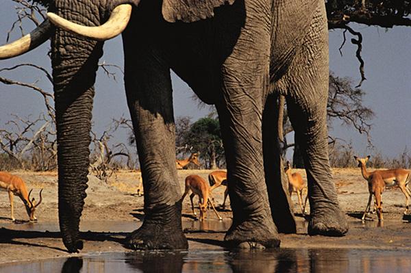 feet-elephant-frans