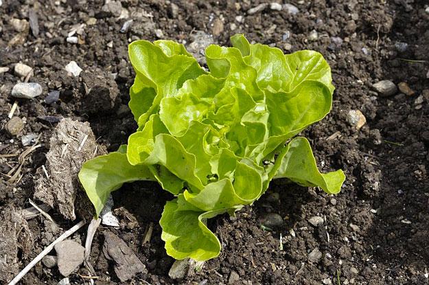 Que faire au jardin en janvier for Jardin que planter en janvier