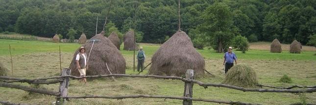 petite agriculture