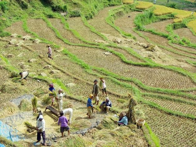 petit agriculture