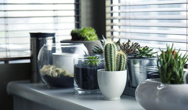 plantes interieur janvier entretien