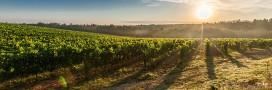 Des pesticides dans le vin bio. Et alors!?