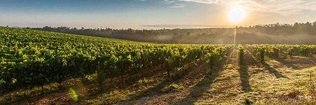 Des pesticides dans le vin bio. Et alors !?