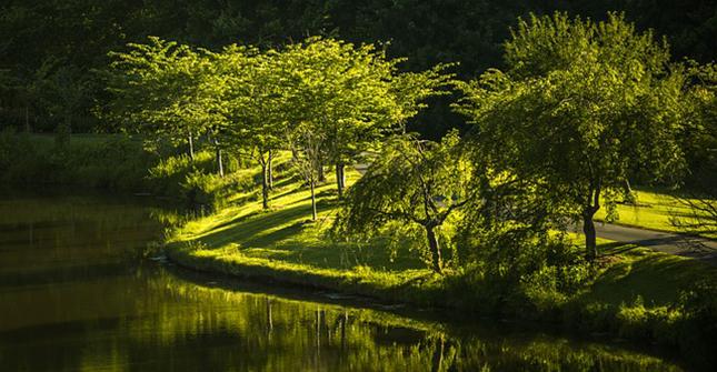 arbre-parc-environnement-nature-paysage-herbe-foret-01
