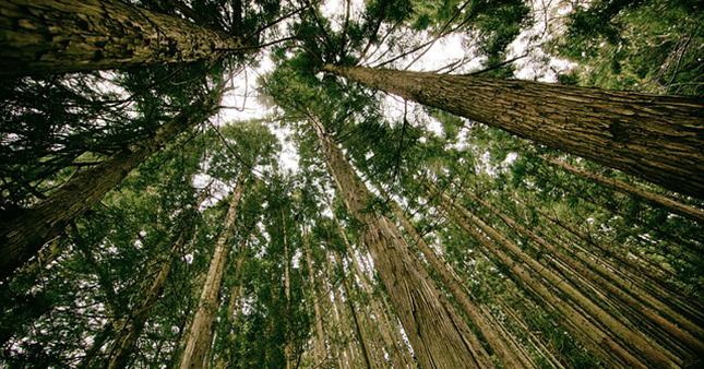 arbre-parc-environnement-nature-paysage-herbe-foret-04