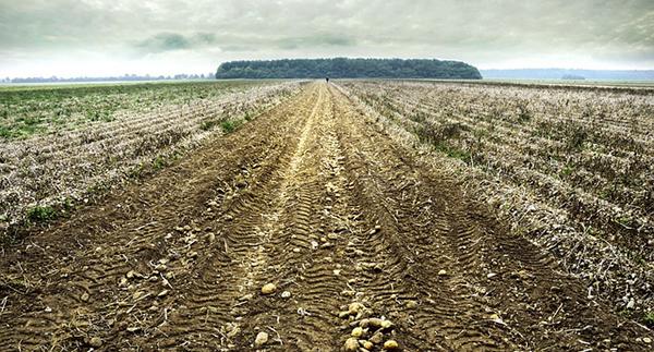 champ-ciel-campagne-agriculture-agroecologie-ecophyto-lutte-contre-les-pesticides-02