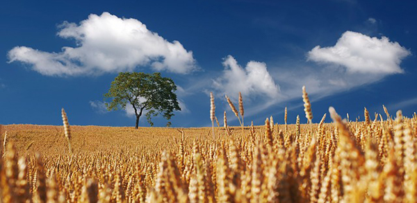 champ-ciel-campagne-agriculture-agroecologie-ecophyto-lutte-contre-les-pesticides-03
