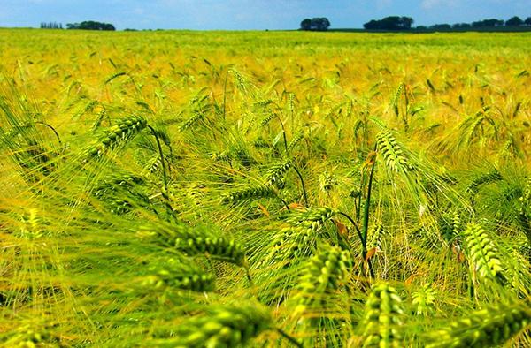 champ-ciel-campagne-agriculture-agroecologie-ecophyto-lutte-contre-les-pesticides-04