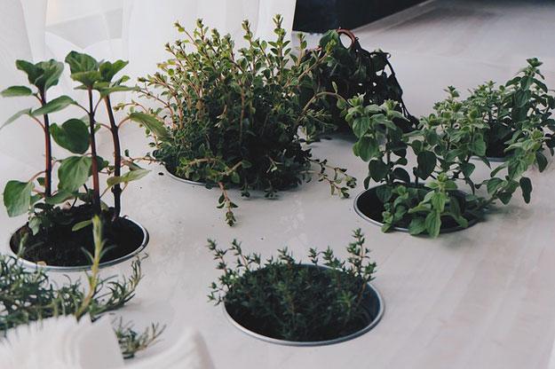 fevrier-plantes-interieur