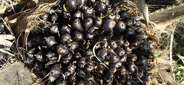 huile-de-palme-palmier-cosmetique-01