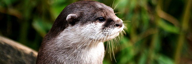 loutre-nature-environnement-animal-protection-00-ban